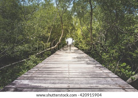 Wooden walkway in mangrove forest