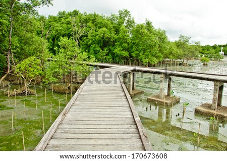 Wooden walkway in Mangrove forest at Petchabuti, Thailand - stock photo