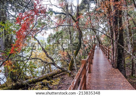 wooden walkway in winter at Pudacuo(Potatso) national park  in the Shangri-La(Zhongdian), Yunnan, China. - stock photo