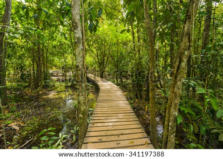 Wooden walkway through green Thailand forest in Krabi, Emerald Island