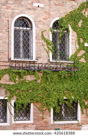 Wooden windows overgrown with ivy - stock photo