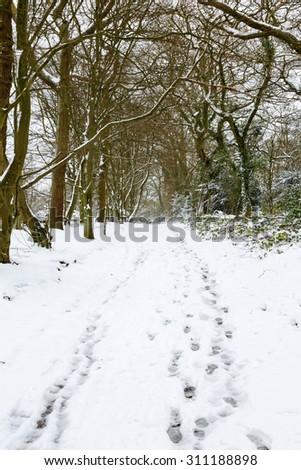 Woodland in snow - stock photo