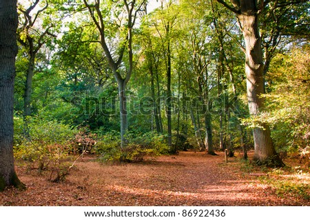 Woodland scene during fall, autumn with fallen leaves.