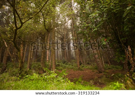 woodland style image of trees and nature shot in a dark forest