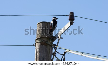 Woodpecker up in a electricity pylon