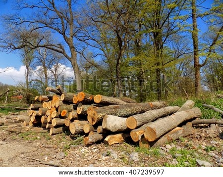 Woodpile in forest