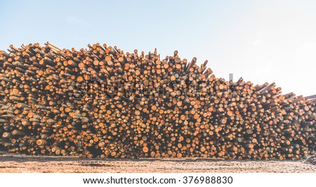 Woodpile of cut Lumber for forestry industry wirh sky background. - stock photo