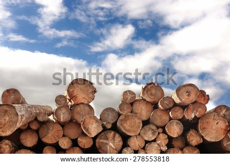 Woodpile Of Pine And Fir Tree Logs With Summer Blue Cloudy Sky On The Background - stock photo
