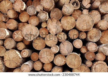 Woodpile. Timber Industrial Background - stock photo