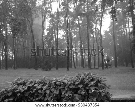 Woods and landscape in black and white