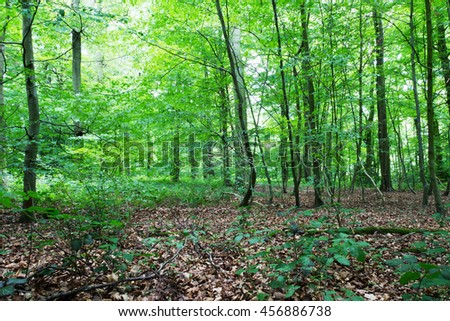 Woods in summer with light shinning through green leaves