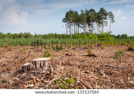 Woods logging one stump after deforestation hack woods in Poland. Group of last coniferous trees blurred behind, dried forest nature degradation, environment control. Horizontal orientation. nobody. - stock photo
