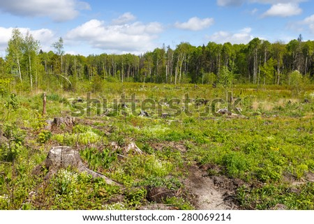 Woods logging  stump after deforestation hack woods   - stock photo