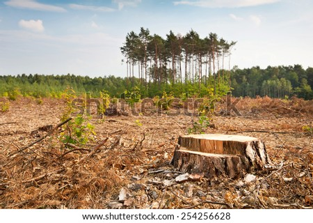 Woods lone trunk in deforestation blast woods in Poland. Group of last coniferous trees blurred behind, dried forest nature degradation, environment control. Horizontal orientation. nobody. - stock photo