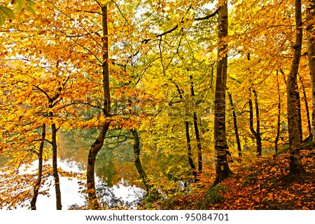 woods,trees,colours,park,autumn leaves,autumn,