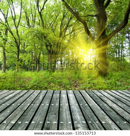 Woods under the sun, the wooden structure of the platform.