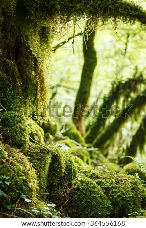 woods with moss in canyon of river mrtvica