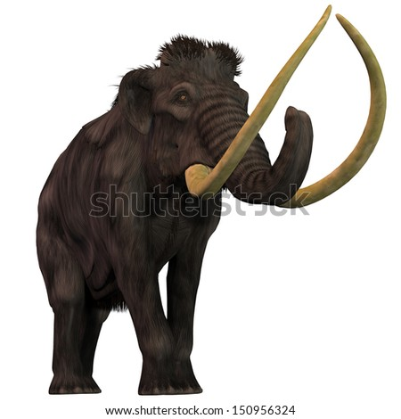 Woolly Mammoth on White - Woolly Mammoths are extinct herbivorous mammals that lived from the Pleistocene to the Holocene Periods. - stock photo