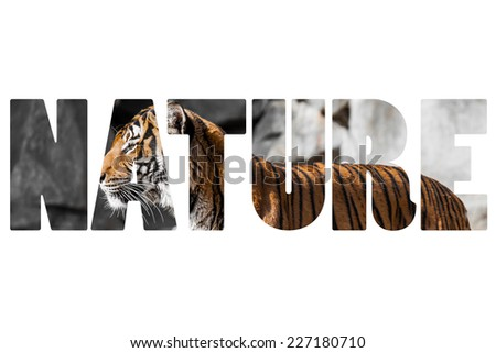 Word NATURE Close-up of a Tigers face. - stock photo
