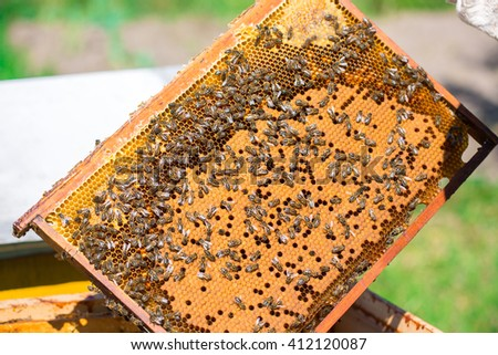 Work bees in hive Bees convert nectar into honey and close it in the honeycomb, and care for larvae