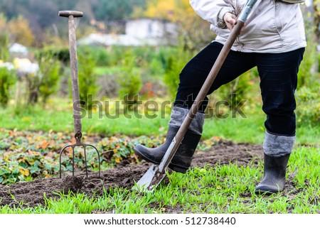 Work Autumn Garden Digging Soil Preparing Stock Photo 512738440