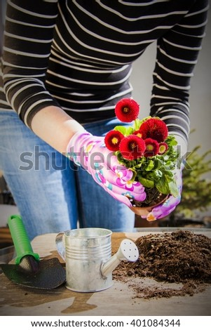 Work in the balcony garden, planting pots - stock photo