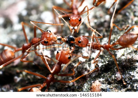 Worker Ant - stock photo