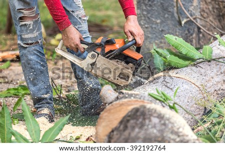 worker cutting timber tree with electrical chainsaw  - stock photo