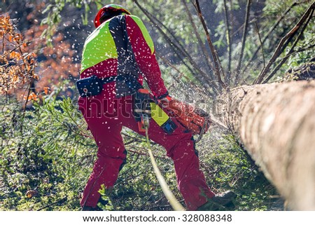 Worker felling the tree with chainsaw  - stock photo