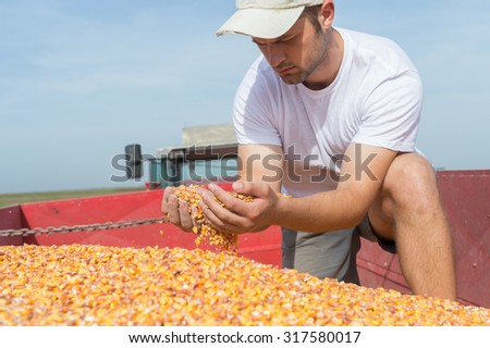Worker holding corn after harvest