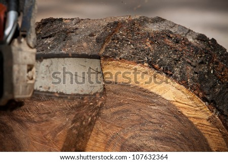 worker man cutting tree by chain saw engine - stock photo