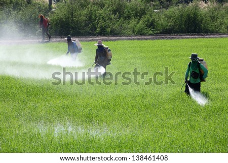 worker spraying pesticide in field. - stock photo