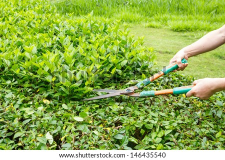 Worker trimming green bushes by shrubs scissors - stock photo