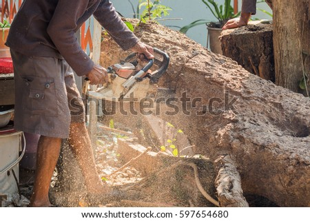 workers cut the big tree by chain saw on piece and scraps of wood
