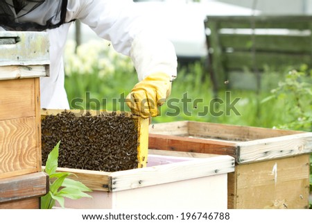 Working apiarist - Beekeeper holding a frame of honeycomb - stock photo