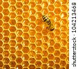 working bee on honeycells. - stock photo