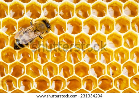 working bee on honeycomb cells close up - stock photo