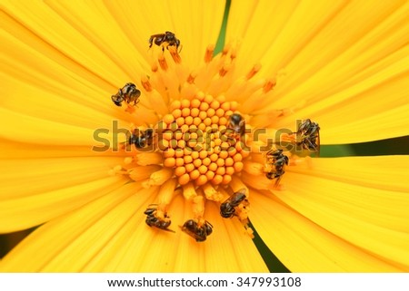 working bees and yellow flowers. - stock photo