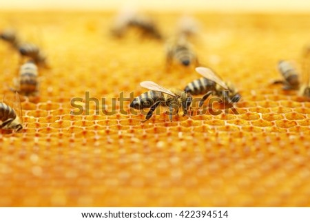Working bees in honeycomb - stock photo