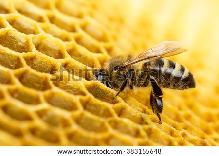 Working bees on honeycomb - stock photo