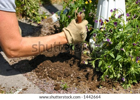 working hard to plant flowers - stock photo