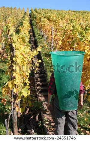Working in the Vineyard in South Germany - stock photo