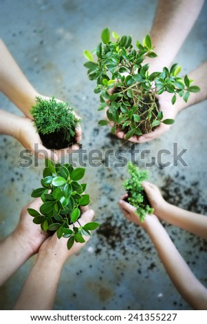 Working together for the environment - group of hands planting seedlings
