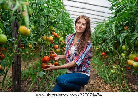 Working with pleasure. Beautiful young woman in uniform gardening and smiling at camera. Greenhouse produce. Food production. Tomato growing in greenhouse. - stock photo