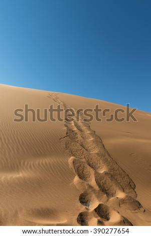 World famous dune 45 near Sossusvlei in the Namib Desert (Namibia)