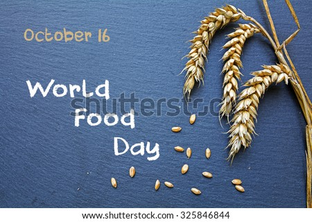World Food Day, October 16, chalkboard with rye and grain and handwritten words - stock photo