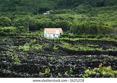 World heritage vineyards in Pico, Azores - stock photo