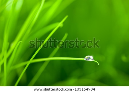 World into a Water Drop on Grass / macro / with copy space World image comes from earthobservatory/NASA