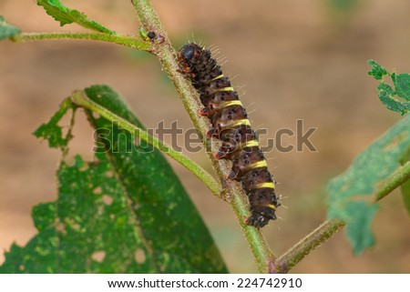 worm is eating the green leaf - stock photo