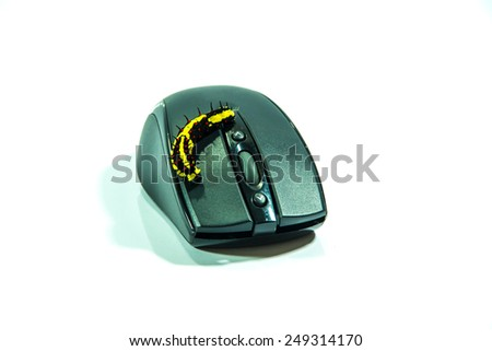 worm on computer mouse - stock photo